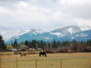 Pasture near the Bitterroot Mountains
