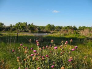 Meadow beside the Platte River in Bayard, Nebraska