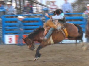 Bucking bronco at the rodeo in Cody, Wyoming