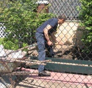 Digging in a garden in Detroit