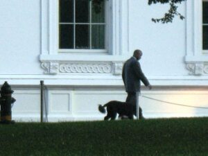 Bo, the Obama's dog, goes for a walk in front of the White House