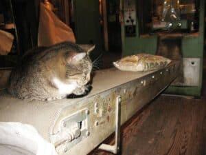 Cat on a conveyer belt