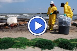 Video on BP oil spill clean up