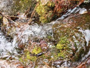A rivulet running down a slope of the Bitterroot Mountains in Spring.