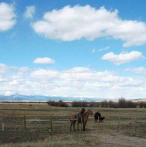 A cowboy mending a fence near Wisdom, Montana.