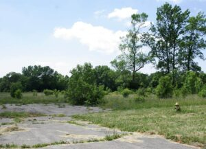 An abandoned street in Love Canal