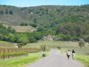 Sonoma Valley wine region