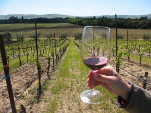 The vineyards of the Sonoma Valley