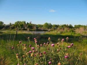 Meadow beside the Platte River in Bayard, Nebraska