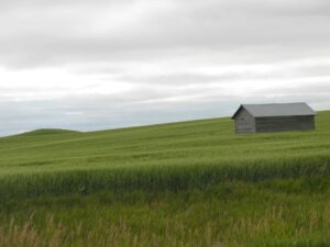 Prairie outside Williston, ND