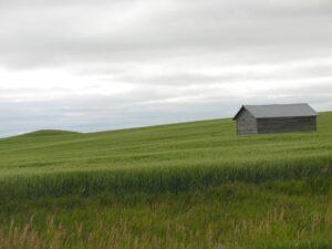 Prairie outside Williston, ND