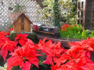 A miniature train winds through a Poinsettia display at the Lincoln Park Conservatory