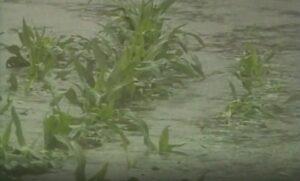 The breach flooded 14,000 acres of farmland