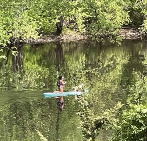 A paddleboarder glides down the Concord River near the North Bridge today.