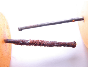 Corroded nails